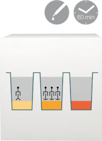 lab-procedure-62 (Demo)